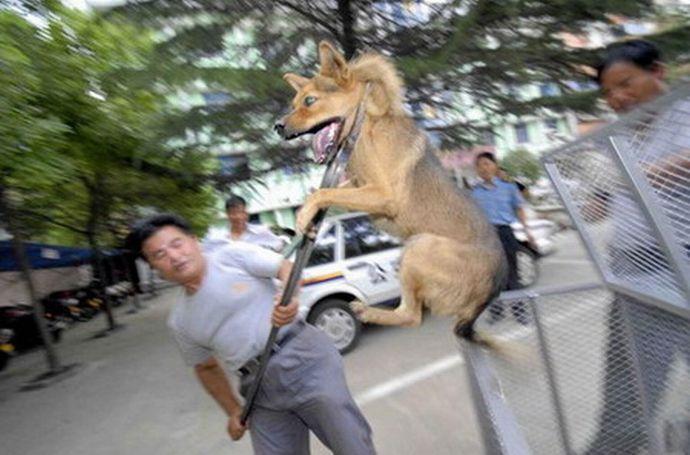 """迷惑飼い主の狂犬、幼児襲撃""""河川敷で遊んでいた幼児ら3人、首ひもを外した状態の大型犬にかまれ病院に搬送""""福岡県朝倉市 %e9%9a%a3%e4%ba%ba%e3%83%88%e3%83%a9%e3%83%96%e3%83%ab %e8%b6%a3%e5%91%b3 %e9%ab%98%e9%bd%a2%e5%8c%96 health %e7%8a%af%e7%bd%aa%e8%a2%ab%e5%ae%b3 domestic %e4%bd%8f%e5%b1%85 jiken"""
