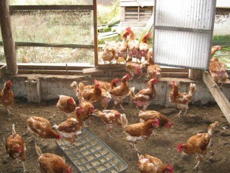 ニュースクリップ@経済2014/07/23中国腐敗鶏肉問題他人事を偽装する加害者達当事者はお前らだ、サラリーマン economy economy news