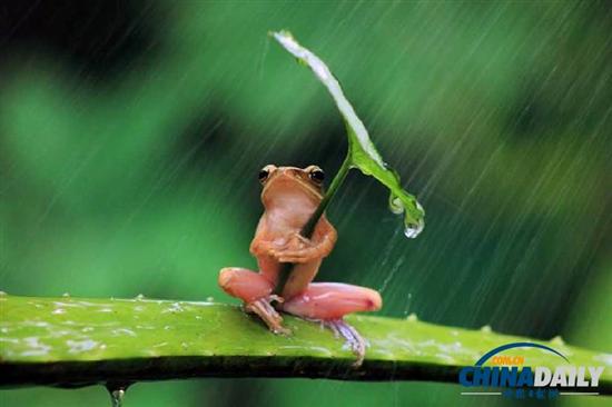 インドネシアで傘をさした蛙が激写! 次は釣り猫実写? health international %e3%82%b5%e3%82%a4%e3%82%a8%e3%83%b3%e3%82%b9