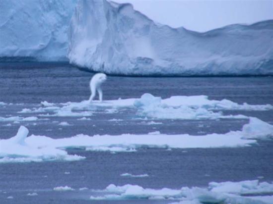 グリーンランド近海で人魚の撮影に成功アニマルプラネット health %e3%82%b5%e3%82%a4%e3%82%a8%e3%83%b3%e3%82%b9